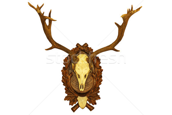 beautiful fallow deer stag hunting trophy Stock photo © taviphoto
