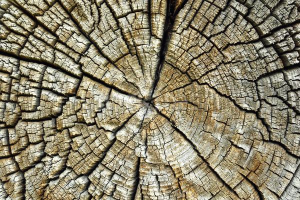 cracked pith of spruce log Stock photo © taviphoto