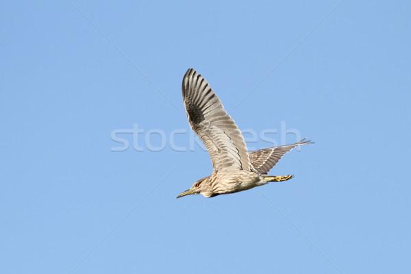 Juvenil voador blue sky verão cor jovem Foto stock © taviphoto