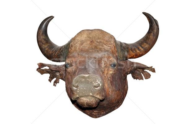 big bull head Stock photo © taviphoto