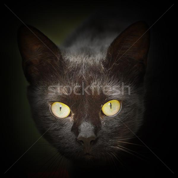 Absztrakt portré fekete macska szemek fekete sötét Stock fotó © taviphoto