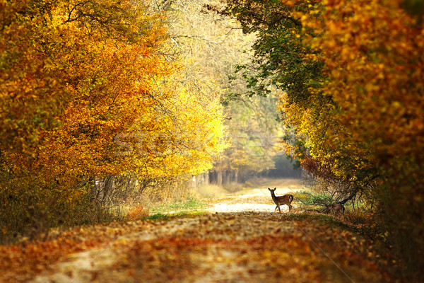 beautiful view of forest road Stock photo © taviphoto
