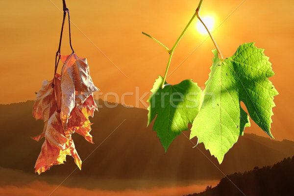 two life stages on leaves Stock photo © taviphoto