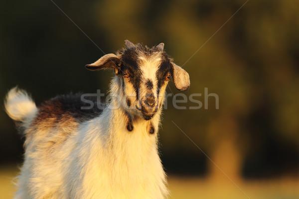 Portret ciekawy twarz dziedzinie Zdjęcia stock © taviphoto