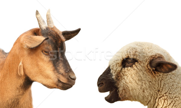 concept with animals arguing Stock photo © taviphoto
