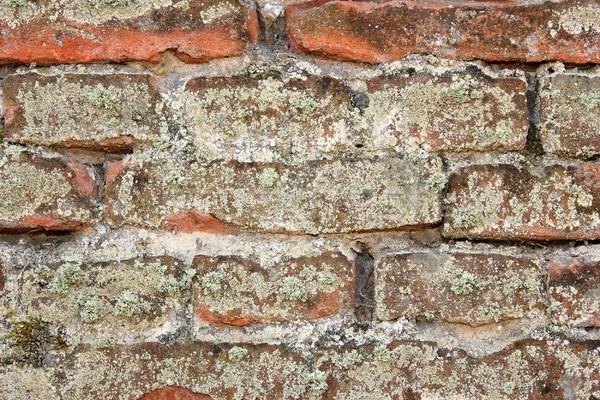 Pormenor musgo antigo parede parede de tijolos velho Foto stock © taviphoto