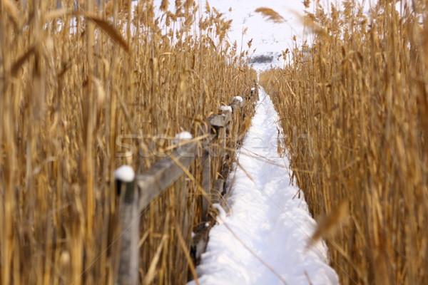 Yol bataklık kış kuşlar can manzara Stok fotoğraf © taviphoto