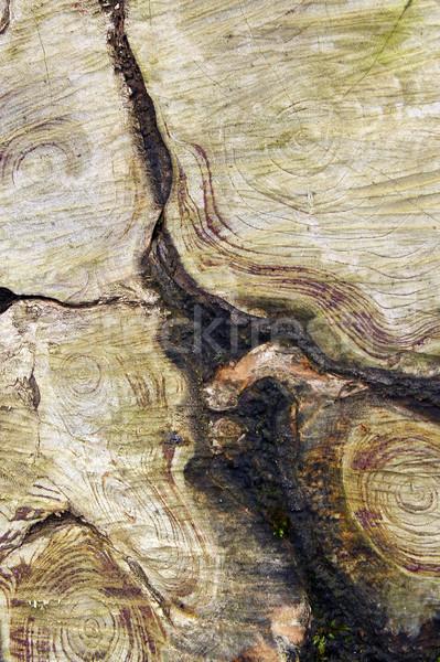Naturelles design annuel anneaux bois coupé Photo stock © taviphoto