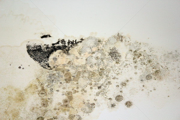 black mold on white old plaster Stock photo © taviphoto