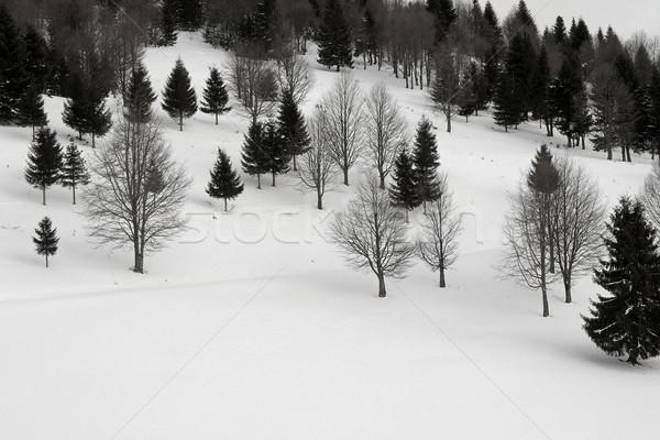 Zdjęcia stock: Lasu · zimą · krawędź · krajobraz · śniegu · górskich