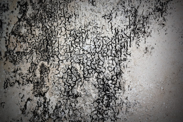 Stock photo: plaster damaged by mold  on old wall
