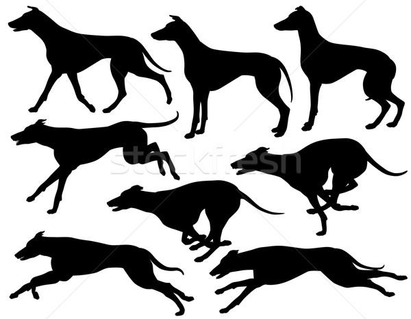 Tazı köpek siluetleri ayarlamak eps8 düzenlenebilir Stok fotoğraf © Tawng