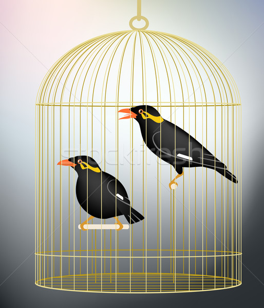 Caged myna birds Stock photo © Tawng