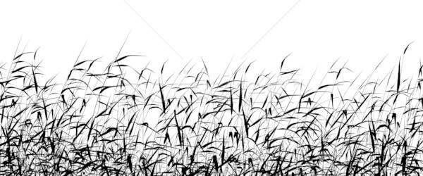 Premier plan détaillée vecteur silhouette herbe Photo stock © Tawng