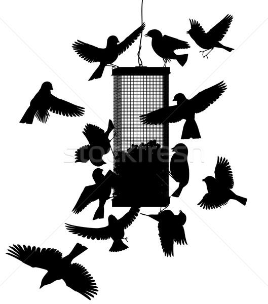 Bird feeder Stock photo © Tawng
