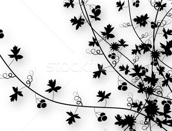 Klimmen wijnstokken schaduw helling Stockfoto © Tawng