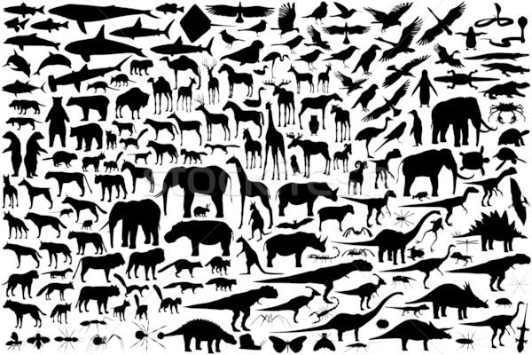 животного набор вектора Сток-фото © Tawng