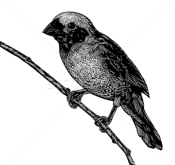 птица eps8 вектора эскиз певчая птица Сток-фото © Tawng