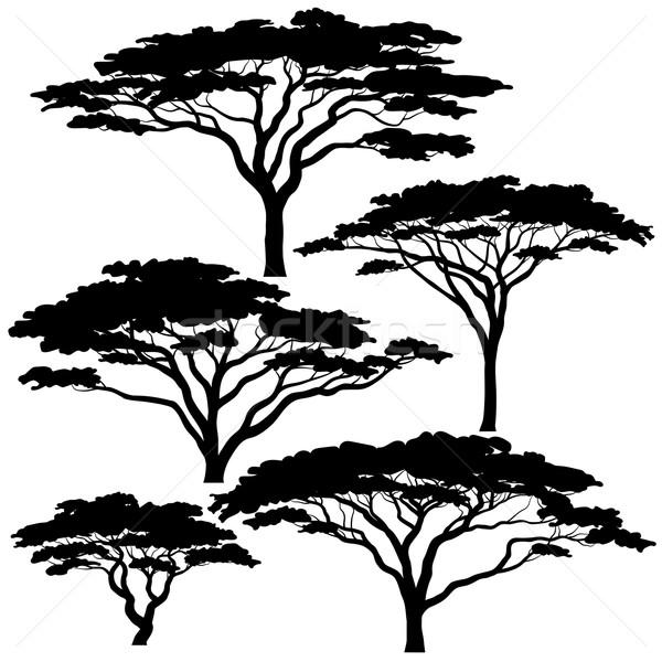 Acacia tree silhouettes Stock photo © Tawng