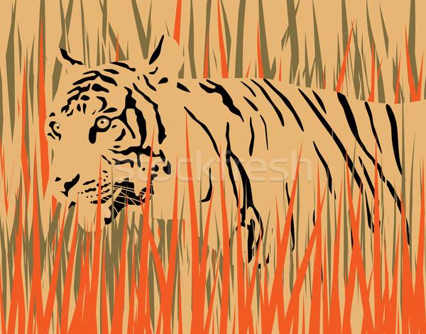 тигр высушите трава отдельный Элементы искусства Сток-фото © Tawng