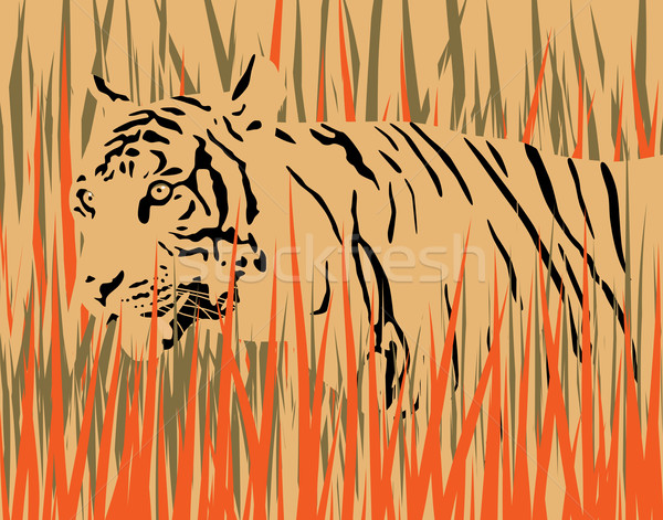 Tigre sécher herbe séparé art Photo stock © Tawng