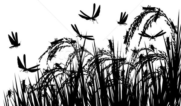 Locusts on rice Stock photo © Tawng