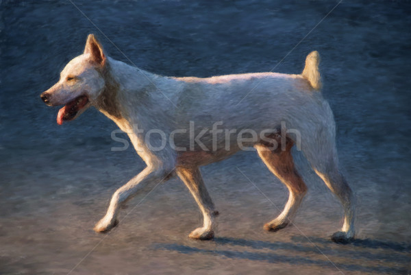 Trotting dog Stock photo © Tawng