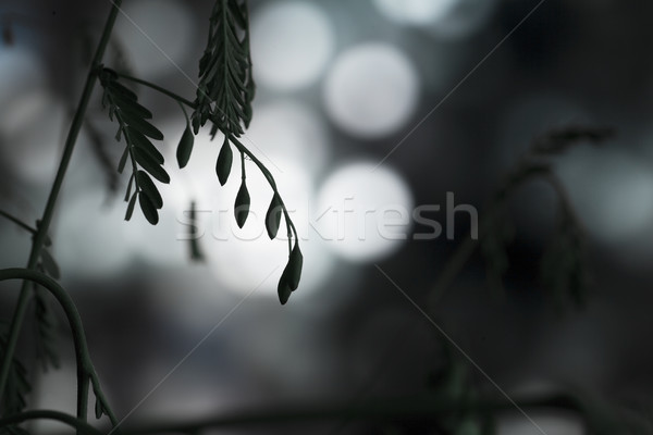Lights through plant Stock photo © Tawng