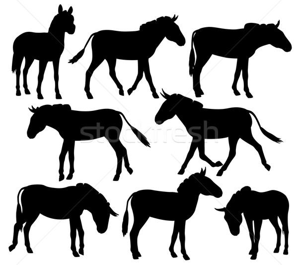Zebră set vector siluete negru Imagine de stoc © Tawng