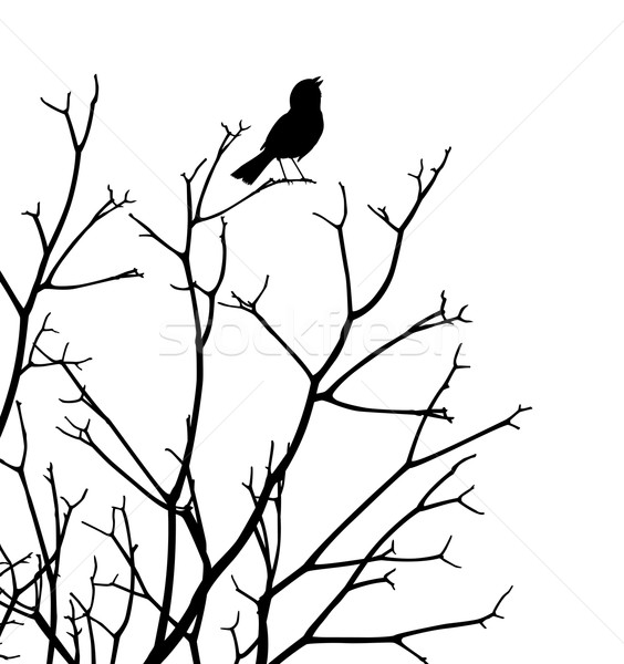 Photo stock: Songbird · vecteur · silhouette · oiseau · chanter