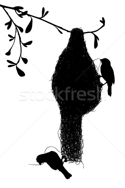 Weaverbirds silhouette Stock photo © Tawng