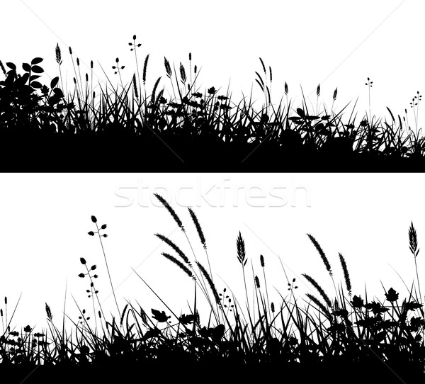 Grassy foregrounds Stock photo © Tawng