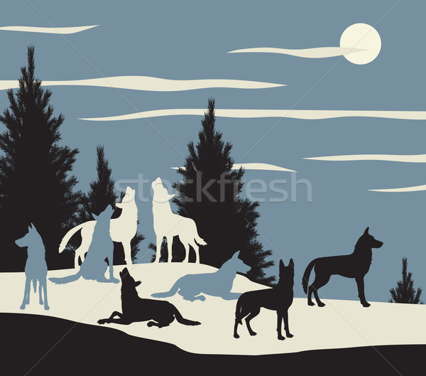 Wolf pack Stock photo © Tawng