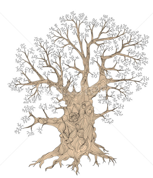 Gnarled tree Stock photo © Tawng