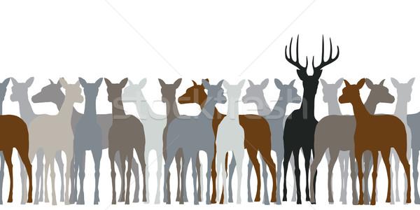 Deer herd Stock photo © Tawng