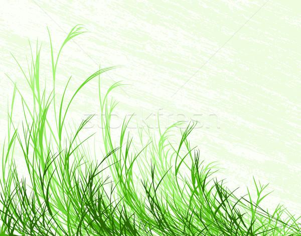 Herbe longtemps grunge séparé Photo stock © Tawng