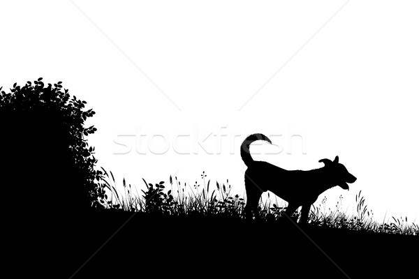 Meadow dog silhouette Stock photo © Tawng