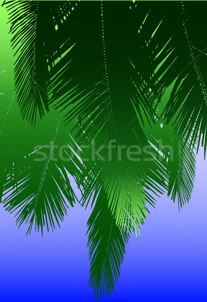 Coconut fronds Stock photo © Tawng