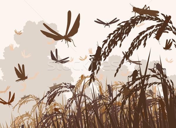 Swarming locusts Stock photo © Tawng