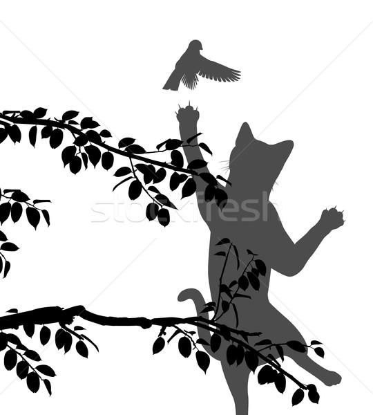 Cat hunting bird Stock photo © Tawng