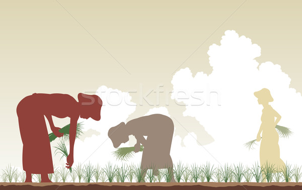 Rice planters Stock photo © Tawng