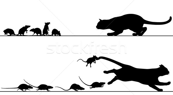 Rats chasing cat Stock photo © Tawng