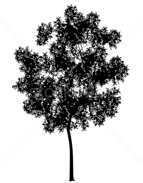 Générique arbre détaillée silhouette nature graphique Photo stock © Tawng