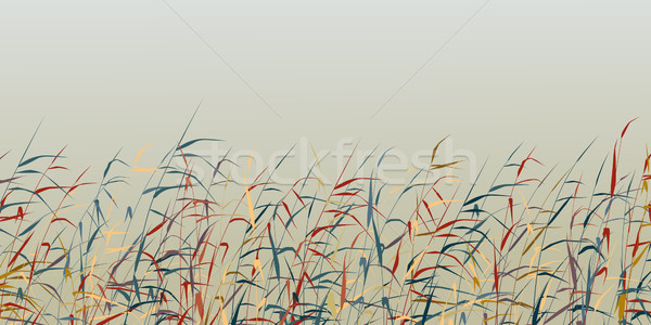 Reed foreground Stock photo © Tawng