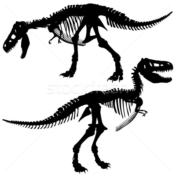 T rex skeleton Stock photo © Tawng