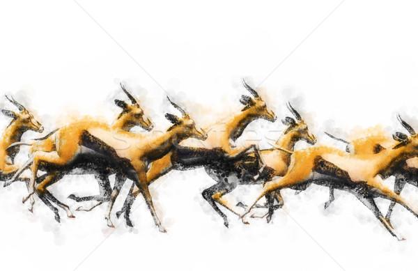 Running gazelles Stock photo © Tawng