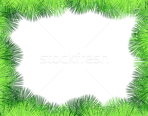 Palm fringe Stock photo © Tawng