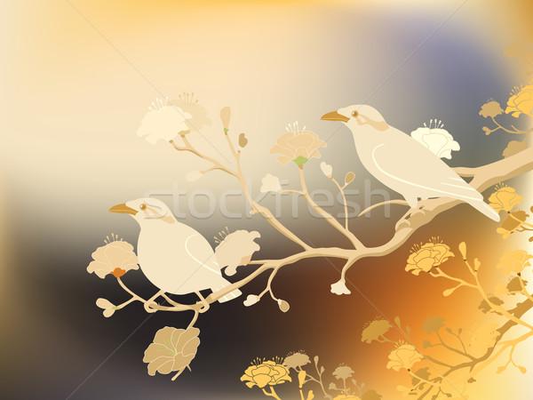 Myna birds Stock photo © Tawng
