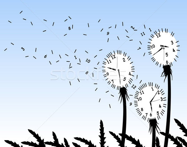 Dandelion clocks Stock photo © Tawng