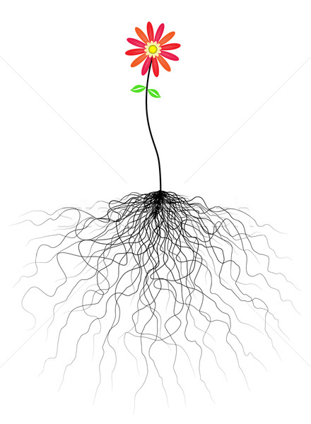 Flower and roots Stock photo © Tawng